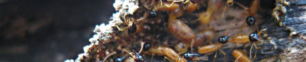 a collection of termites 3