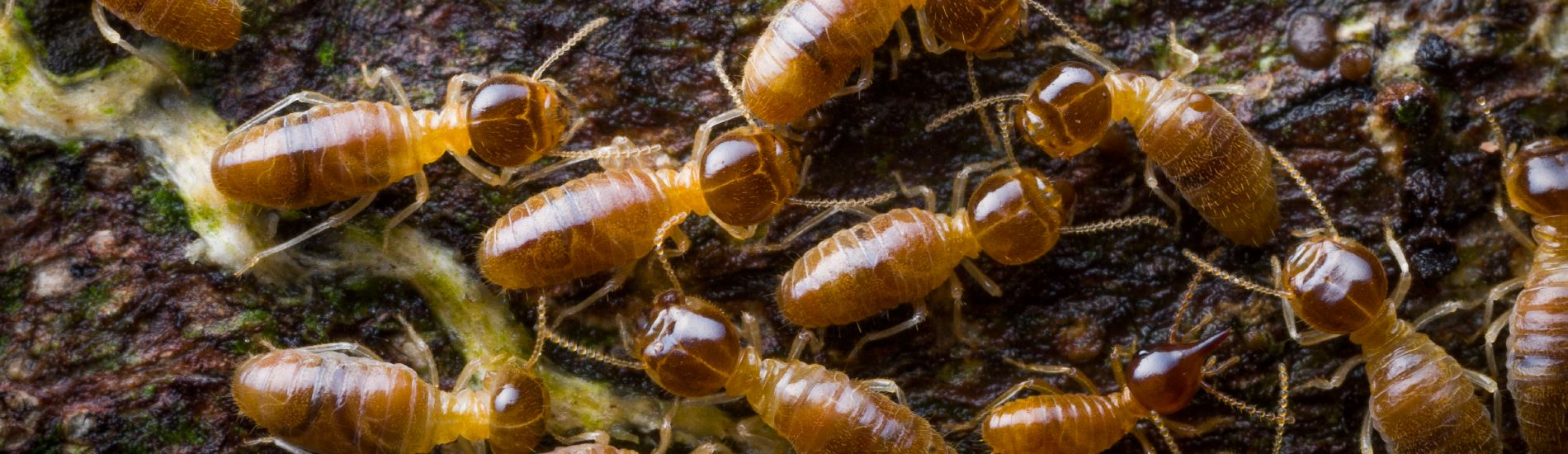 a collection of termites