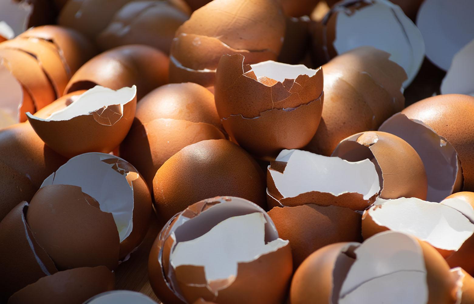 Unwashed Eggshells
