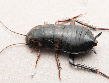 pests control company in singapore